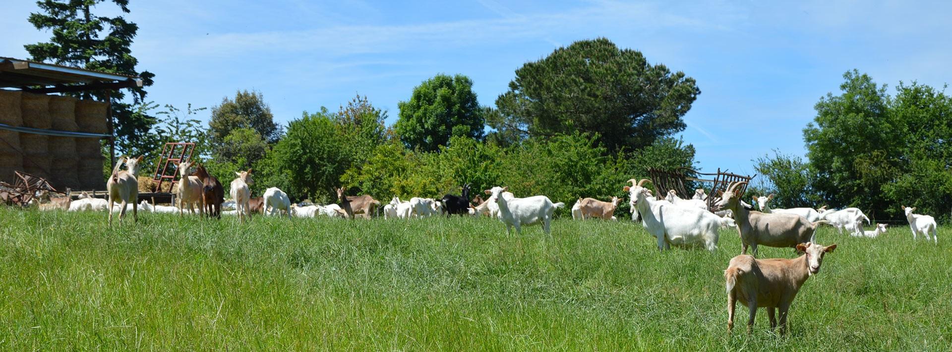 Coopérative producteurs de lait de vache et chèvre fermier Sèvre & Belle